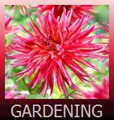 Gardening and Plants